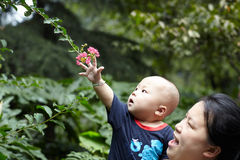 Baby touching flowers Stock Image
