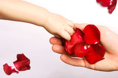 Baby touching rose petals Royalty Free Stock Image