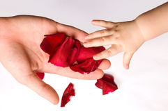 Baby touching rose petals Stock Photos