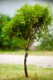 Baby tree Royalty Free Stock Images