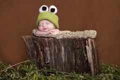 Baby tree frog Royalty Free Stock Photos