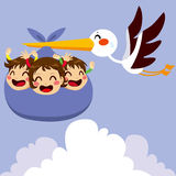 Baby Triplets Delivery. Cute stork flying with three excited baby triplets for delivery Stock Photography