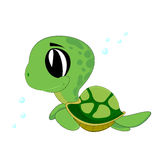 Baby turtle. Cute baby turtle swimming of Royalty Free Stock Photo