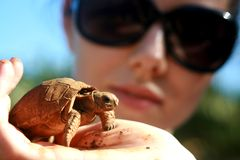 Baby turtle on Mauritius Royalty Free Stock Image