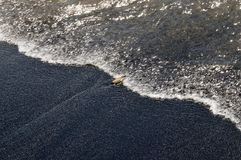 Baby turtle reaches the ocean Royalty Free Stock Photography
