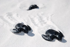 Baby turtles from black rubber Royalty Free Stock Images