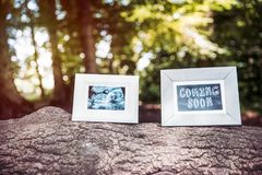 Baby Ultrasound and Coming Soon Photo Frames on Tree Trunk in Fo. Rest stock images