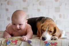 Baby und Spürhund Lizenzfreie Stockfotos