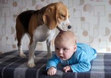 Baby und Spürhund Stockfoto
