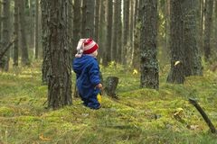Toddler on a walk in the pine forest Stock Image
