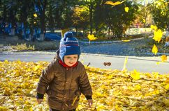 Baby walks in the park on fallen colorful leaves in autumn day royalty free stock photography