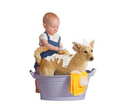 Baby washing dog Royalty Free Stock Photo
