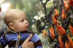Baby watching the gold fishes Royalty Free Stock Photo
