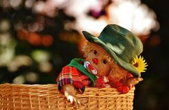 Baby Wearing Green Hat and Red Black and Yellow Plaid Top Inside Brown Wicker Basket Stock Image