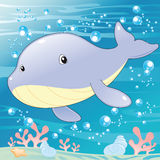 Baby Whale. Vector illustration, software: Illustrator Stock Images