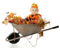 Baby Wheelbarrow Pumkin royalty free stock image