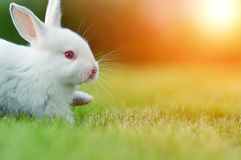 Baby white rabbit in grass Stock Photo