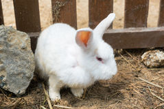 Baby white rabbit standing in cage Stock Photography