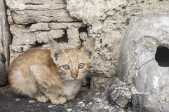 Baby wild cat. A baby cat near old wall, the cat look at you Stock Photos