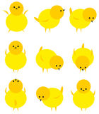 Baby yellow chicken isolated on white icon set. Adorable nature pets yellow chicken bird character funny farm livestock newborn animal. Fluffy cartoon little Stock Photo