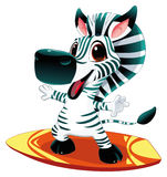 Baby zebra with surf. Funny cartoon and  sporty character Stock Photos