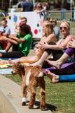 Baby-Ziegen-Spreizen unter den Frauen, die an der Yoga-Klasse ausdehnen lizenzfreie stockfotografie