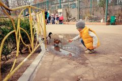 Baby at the zoo. Little boy in a yellow jacket to feed the ducks at the zoo Royalty Free Stock Photo