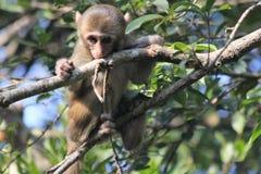 Babyaap in een boom royalty-vrije stock foto