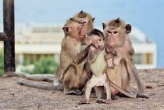 Babyaap en Familie Stock Foto's