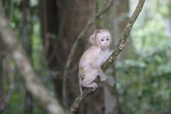 Babyaap het hangen op boom Royalty-vrije Stock Afbeelding