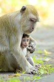 Babyaap in mother& x27; s wapens Royalty-vrije Stock Foto's