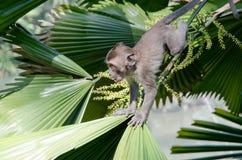 Babyaffe auf einer Palme Stockfotos