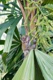 Babyaffe auf einer Palme Lizenzfreie Stockfotos
