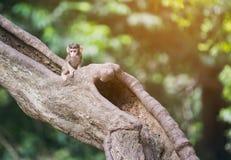Babyaffe, der auf dem Baum sitzt Stockfotos