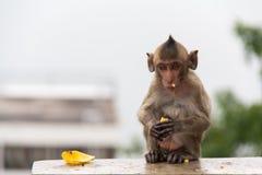 Babyaffe, der auf dem Beton sitzt Lizenzfreies Stockfoto