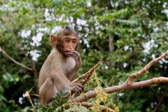 Babyaffe, der auf einem Baum sitzt und isst Lizenzfreie Stockbilder