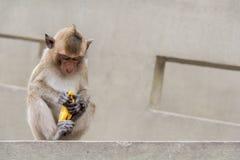 Babyaffe, der Banane sitzt und isst Lizenzfreie Stockfotos