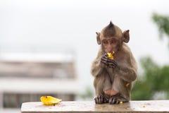 Babyaffe, der Banane sitzt und isst Stockfotos