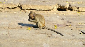 Babyaffe, der eine Banane isst Lizenzfreies Stockfoto