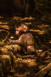Babyaffe, der mit Blumen in einem Wald spielt lizenzfreie stockbilder