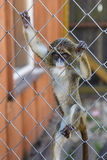 Babyaffe im Käfig im Zoo Stockfotografie