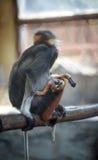Babyaffe mit seiner Mutter Lizenzfreies Stockbild