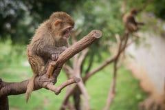 Babyaffeaufenthalt auf Baum Lizenzfreies Stockfoto
