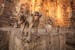 Babyaffen im thailändischen Tempel Stockfoto