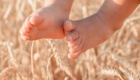 Babybenen tegen de achtergrond van tarwe Royalty-vrije Stock Afbeeldingen