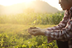 Babybetriebsan hand Landwirtschaft Naturnahaufnahme und selektiver Fokus und Weinlese tonen Stockfoto