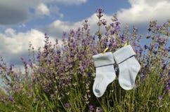 Babyblausocken und Lavendelfeld Lizenzfreies Stockbild