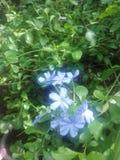 Babyblauw stock foto