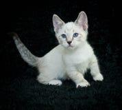 Babyblauw Royalty-vrije Stock Foto's