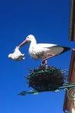 Babyboom - Storch Stockbild